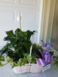 2 Plant Combo Basket from Kelley's Florist in Lake Placid, FL
