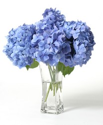 Simply Hydrangeas from Kelley's Florist in Lake Placid, FL